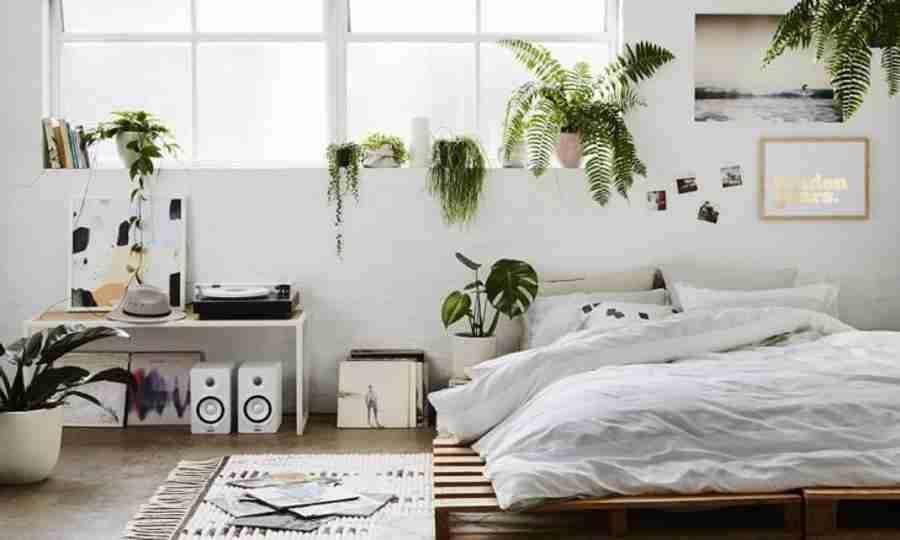 Você pode ter plantas no quarto, sim! Veja como ter verde no dormitório