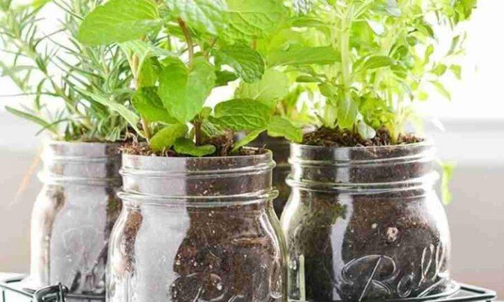 20 ideias bem simples para montar sua horta em casa (até em pouquíssimo espaço)