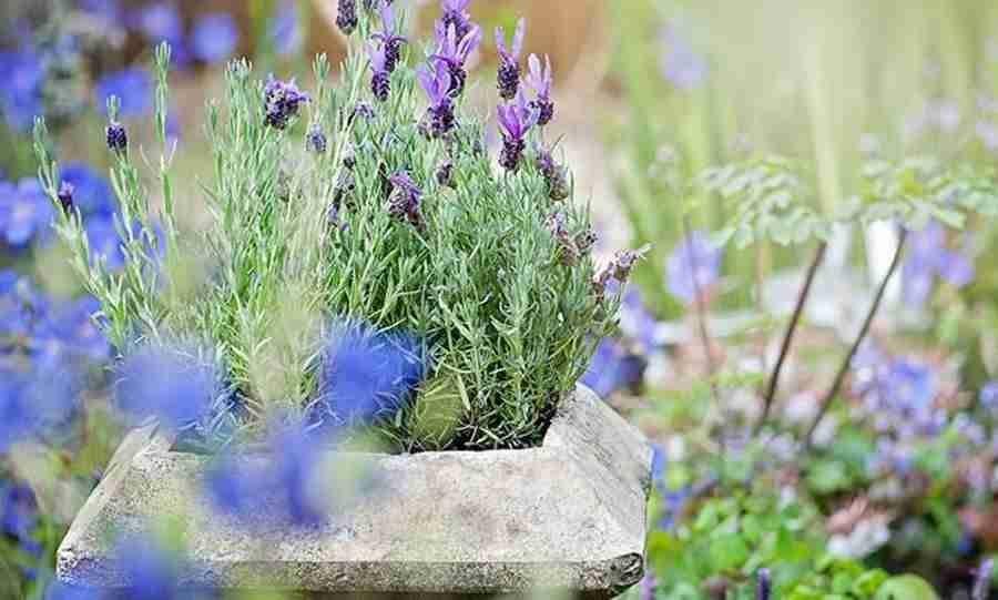 7 plantas lindas que repelem mosquitos e insetos naturalmente