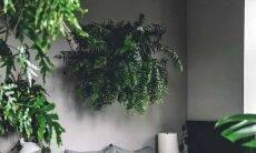 Samambaia: saiba como cuidar e incluir a planta na decoração