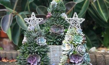 Árvores de Natal de suculentas: tendência perfeita para apartamentos pequenos