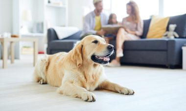 Saiba como escolher o piso ideal para uma casa com pets