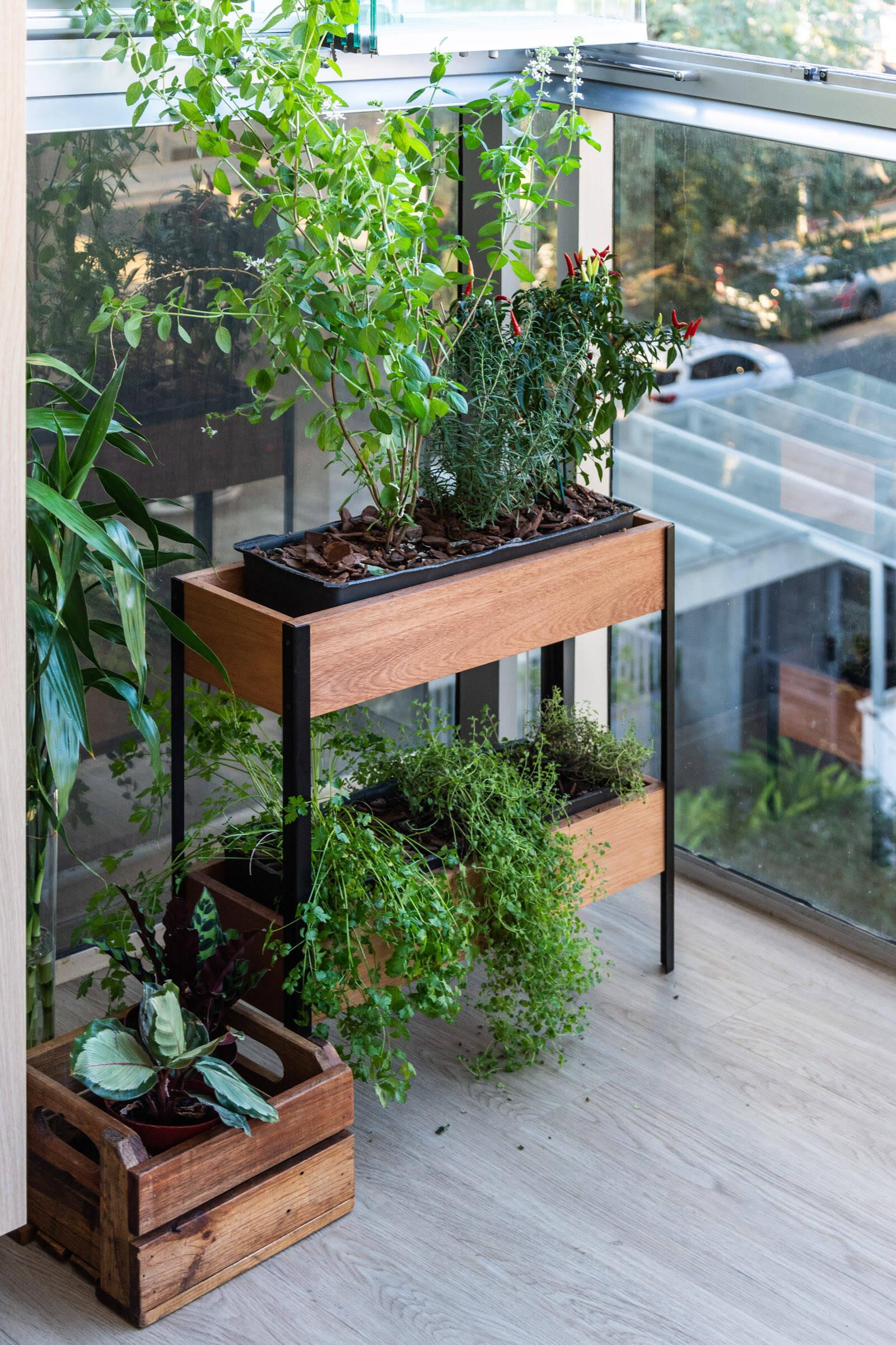 Tudo o que você precisa saber antes de cultivar plantas em casa