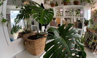 Feng shui: Confira as plantas recomendadas para cada signo