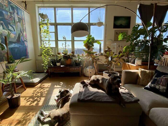 Cachorros e plantas
