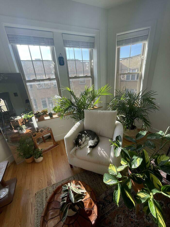 Jardim hygge dentro de casa
