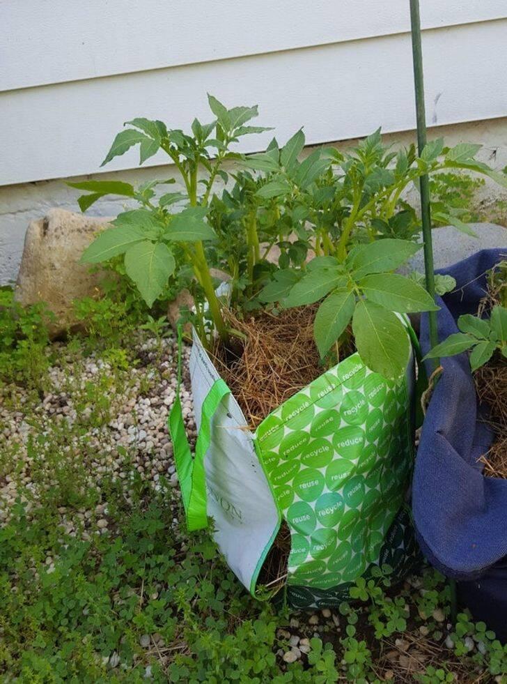 Dicas de jardinagem DIY. Fotos: Reprodução/Reddit