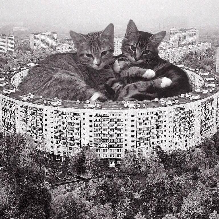 Arquitetura brutalista + Gatos giantes. Fotos: Reprodução/Instagram