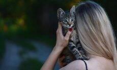 Criar vínculo com gato. Foto: Dids