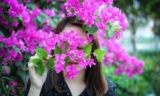 Aprenda cuidados com a bougainvillea, popularmente conhecida como primavera. Foto: Dung Le Tien