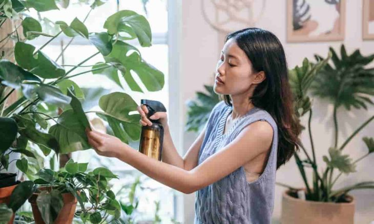 Guia de transição de plantas para dentro de casa. Foto: Sasha Kim