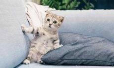 Como amenizar as reações alérgicas aos gatos. Foto: Tranmautritam/ Pexel
